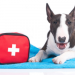 Thumbnail for April is National Pet First Aid Awareness Month
